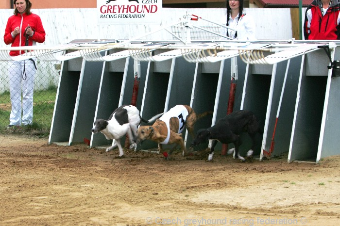 Greyhound_Schooling_Academy_Czech_Greyhound_Racing_Federation_NQ1M8719.JPG