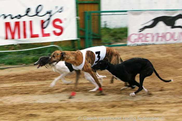 Greyhound_Schooling_Academy_Czech_Greyhound_Racing_Federation_NQ1M8725.JPG
