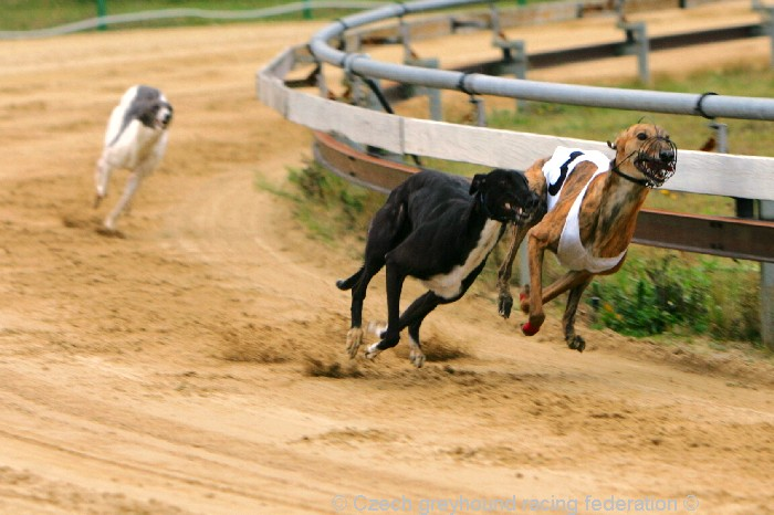 Greyhound_Schooling_Academy_Czech_Greyhound_Racing_Federation_NQ1M8743.JPG