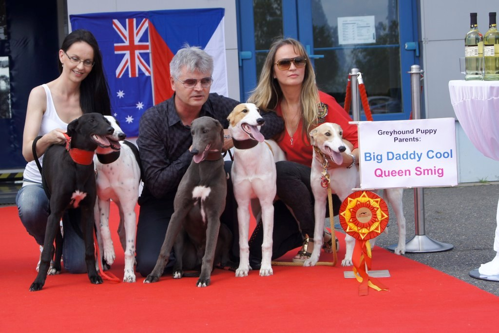Puppy_Big_Daddy_Cool_Czech_Greyhound_Racing_Federation_DSC07906-v.JPG