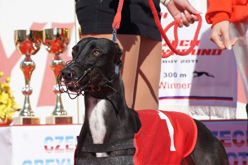 Winner_NewMac_Dior_Czech_Greyhound_Racing_Federation_DSC02348.jpg