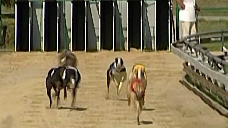 Vigorous_Brandon_attacks_3_Czech_Greyhound_Racing_Federation.JPG