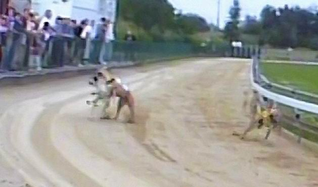 Kengeylfuto_Karcsu_attacks_2_Czech_Greyhound_Racing_Federation.JPG