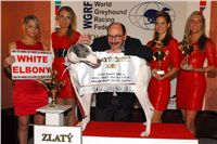 Zlaty_Chrt_Velmistr_White_Setlik_Czech_Greyhound_Racing_Federation_Dsc_0161.jpg