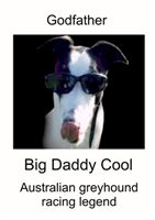 Big_daddy_cool_resized_Czech_greyhound_racing_federation.jpg