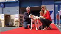 Puppy_Big_Daddy_Cool_Czech_Greyhound_Racing_Federation_DSC07884.JPG