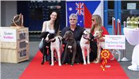 Puppy_Big_Daddy_Cool_Czech_Greyhound_Racing_Federation_DSC07903.JPG
