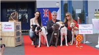 Puppy_Big_Daddy_Cool_Czech_Greyhound_Racing_Federation_DSC07905.JPG