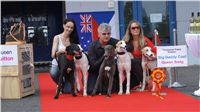 Puppy_Big_Daddy_Cool_Czech_Greyhound_Racing_Federation_DSC07906.JPG