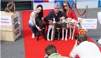 Puppy_Big_Daddy_Cool_Czech_Greyhound_Racing_Federation_DSC07907.JPG