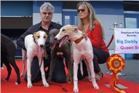 Puppy_Big_Daddy_Cool_Czech_Greyhound_Racing_Federation_DSC07920.JPG