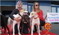 Puppy_Big_Daddy_Cool_Czech_Greyhound_Racing_Federation_DSC07922.JPG