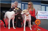 Puppy_Big_Daddy_Cool_Czech_Greyhound_Racing_Federation_DSC07923.JPG