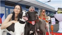Puppy_Big_Daddy_Cool_Czech_Greyhound_Racing_Federation_DSC07924.JPG