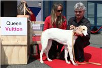 Puppy_Big_Daddy_Cool_Czech_Greyhound_Racing_Federation_IMG_2018.jpg