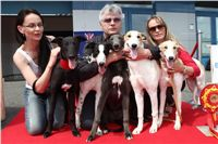 Puppy_Big_Daddy_Cool_Czech_Greyhound_Racing_Federation_IMG_2026.jpg