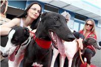 Puppy_Big_Daddy_Cool_Czech_Greyhound_Racing_Federation_IMG_2031.JPG