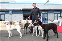 Puppy_Big_Daddy_Cool_Czech_Greyhound_Racing_Federation_IMG_2035.jpg