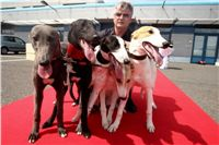 Puppy_Big_Daddy_Cool_Czech_Greyhound_Racing_Federation_IMG_2040.jpg