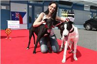 Puppy_Big_Daddy_Cool_Czech_Greyhound_Racing_Federation_IMG_2045.jpg