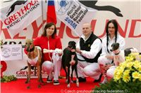 Greyhound_Schooling_Academy_Czech_Greyhound_Racing_Federation_NQ1M8922.JPG