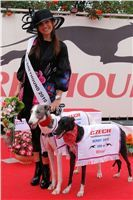 Miss_Greyhound_Czech_Greyhound_Racing_Federation_2010.jpg