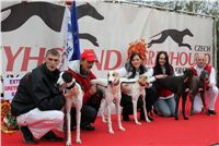 Australian_pups_Czech_Greyhound_Racing_Federation_IMG_0823.jpg