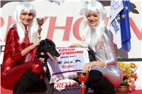 002_Zlaty_Chrt_Dior_Czech_Greyhound_Racing_Federation_IMG_0269.jpg