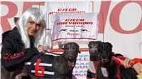 009_Zlaty_Chrt_Dior_Czech_Greyhound_Racing_Federation_DSC02300.jpg