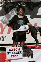 010_Zlaty_Chrt_Dior_Czech_Greyhound_Racing_Federation_NQ1M5407.jpg
