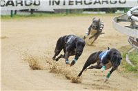013_Zlaty_Chrt_Dior_Czech_Greyhound_Racing_Federation_DSC02262.jpg