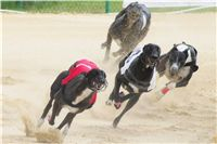 016_Zlaty_Chrt_Dior_Czech_Greyhound_Racing_Federation_DSC02772.jpg