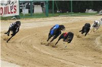 020_Zlaty_Chrt_Dior_Czech_Greyhound_Racing_Federation_IMG_0699.jpg