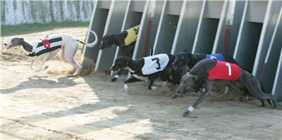 022_Zlaty_Chrt_Dior_Czech_Greyhound_Racing_Federation_NQ1M0011.jpg