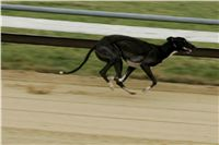 024_Zlaty_Chrt_Dior_Czech_Greyhound_Racing_Federation_NQ1M1400.jpg