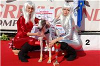 Czech_Derby_Czech_Greyhound_Racing_Federation_DSC00138.jpg