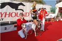 White_Miss_Greyhound_CGDF_DSC05524-r.JPG