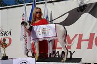 White_Mistr_CR_Czech_Greyhound_Racing_Federation_DSC08082.JPG
