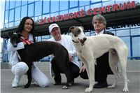 White_Zlaty_chrt_Velmistr_Czech_Greyhound_Racing_Federation_DSC00617.jpg