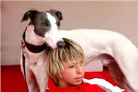 White_Zlaty_chrt_Velmistr_Czech_Greyhound_Racing_Federation_DSC01229.JPG