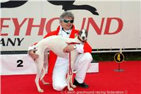 White_Zlaty_chrt_Velmistr_Czech_Greyhound_Racing_Federation_DSC02272.jpg