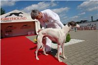 White_Zlaty_chrt_Velmistr_Czech_Greyhound_Racing_Federation_DSC02660.jpg
