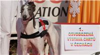 White_Zlaty_chrt_Velmistr_Czech_Greyhound_Racing_Federation_DSC03377-u.jpg