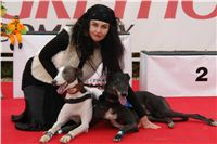 White_Zlaty_chrt_Velmistr_Czech_Greyhound_Racing_Federation_DSC05709.JPG