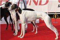 White_Zlaty_chrt_Velmistr_Czech_Greyhound_Racing_Federation_DSC05826.JPG