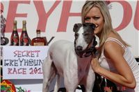 White_Zlaty_chrt_Velmistr_Czech_Greyhound_Racing_Federation_DSC07974.jpg