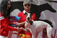 White_Zlaty_chrt_Velmistr_Czech_Greyhound_Racing_Federation_NQ1M0620.jpg