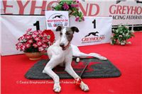 White_Zlaty_chrt_Velmistr_Czech_Greyhound_Racing_Federation_NQ1M6849.jpg