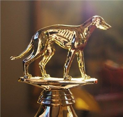 Golden_Greyhound_Czech_Greyhound_Racing_Federation_DSC07161-l-JPG.jpg