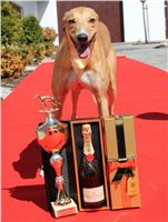 Lemon_Moet_&_Chandon_Czech_Greyhound_Racing_IMG_5024.JPG